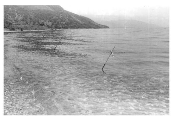 zyoba fishing lines 1950