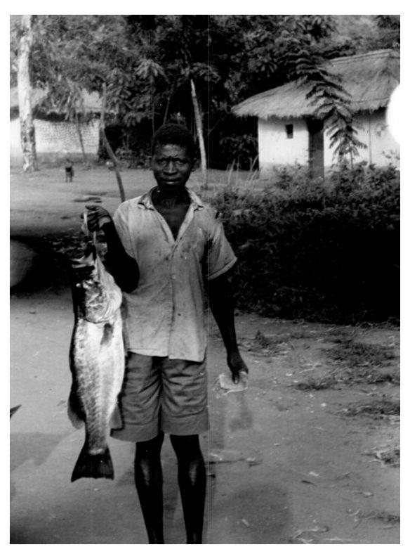 Zyoba Sangala fish number 37 1950